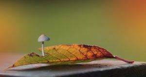 Herfst - kleuren