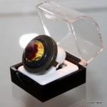 Ring-Glasvlinder