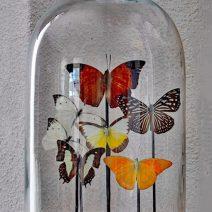 Vlinders in glazen stolp