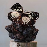 vlinder op natuursteen