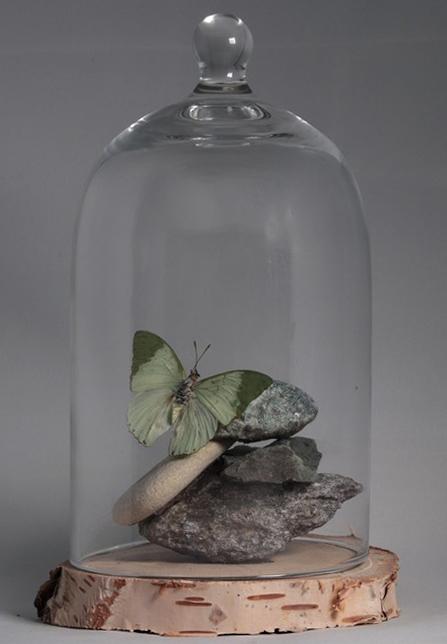 vlinder in glazenstolp