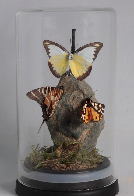 drie vlinders