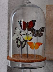 vlinders in glazenstolp