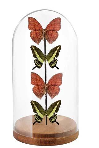 vier vlinder stolp