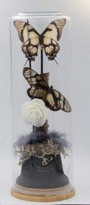 gedroogde vlinders in stolp