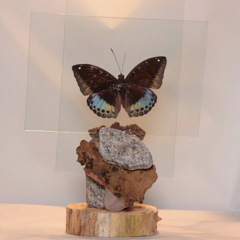 vlinder in glas