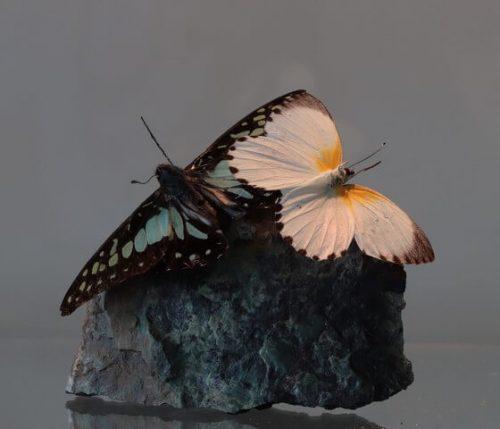 Vlinders op natuursteen