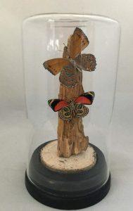 vlinders in cilinder