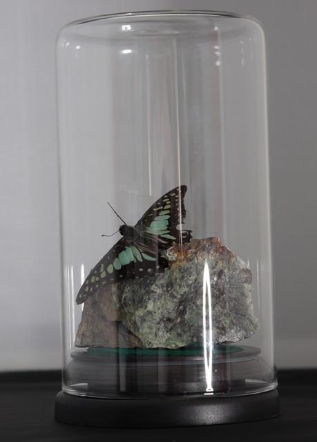 gedroogde vlinder op steen