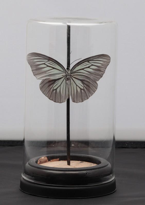 vlinder in stolp