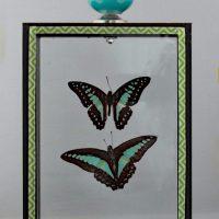 vlinders in glas