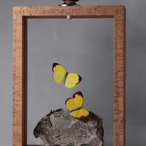 gele vlinders