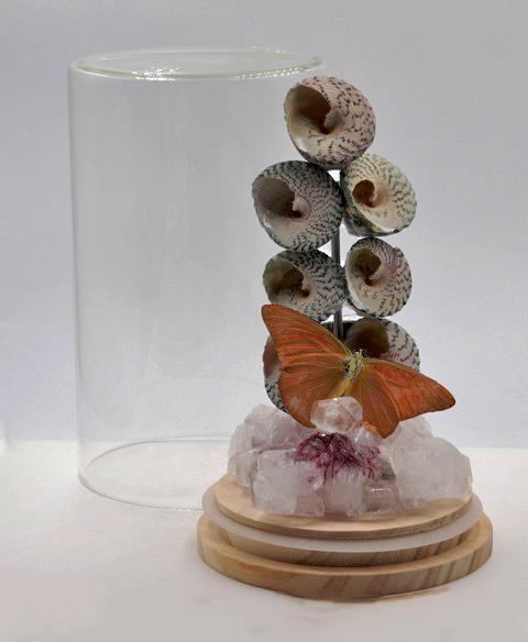 Vlinder met schelpen