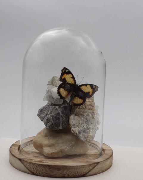 Natuursteen met vlinder