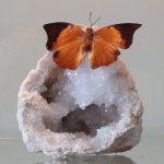 vlinder op edelsteen