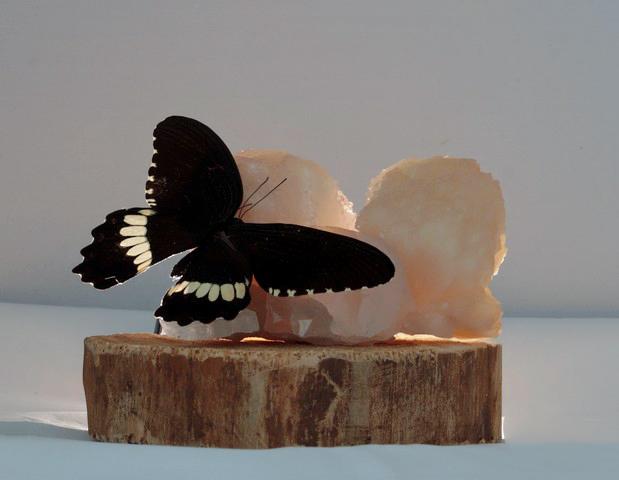 Design vlinder en edelstenen