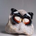 mineraal met vlinder