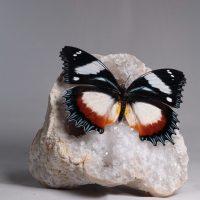 Design Vlinder - Edelstenen