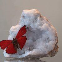 rode vlinder op edelsteen
