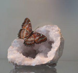 edelsteen met vlinder
