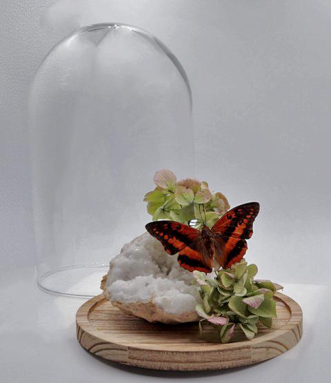 Gedroogde vlinder op Kwarts geodes