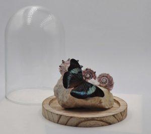 Mooie vlinder in glazenstolp