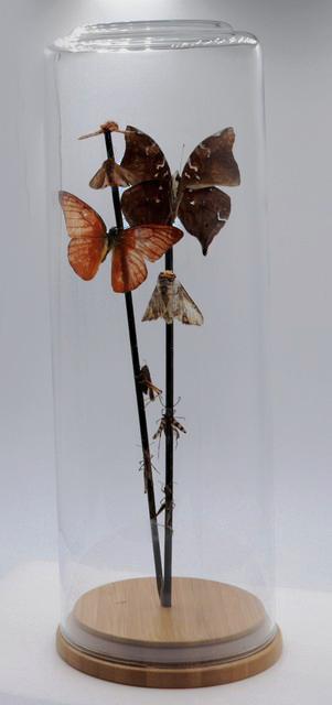 Diverse vlinders in cilinder