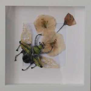 Gedroogde bloemen met kever in lijst