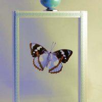 Vlinders en insecten in lijst