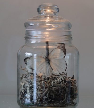 vlinder in glazen pot
