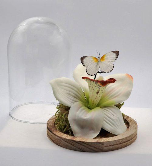 Witte bloem met vlinder