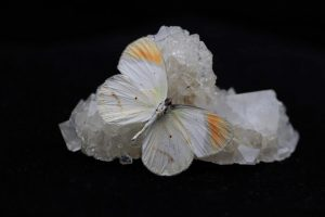 Zoutkristal