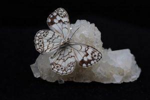 Vlinder op zoutkristal