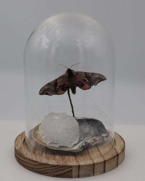Pauwoog met zoutkristal