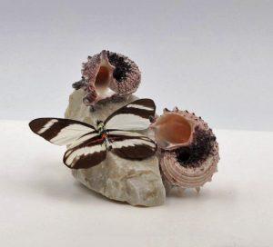 gedroogde vlinder