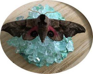 Zoutkristallen